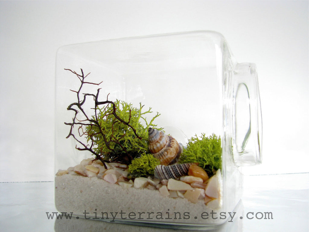 Modern Beach Cube Lichen Terrarium: White, Natural or Black Sand - Modern Beach Cube Lichen Terrarium: White, Natural Or Black Sand