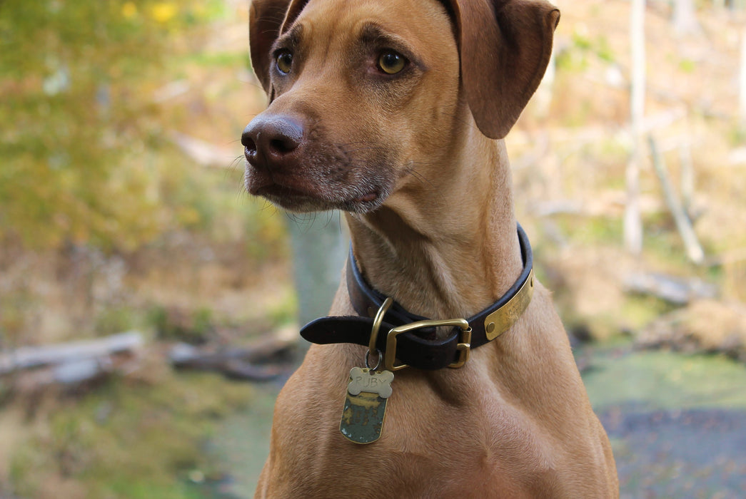 Brown Dog Collar - On Dog