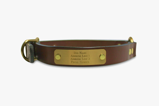 "Brown Dog Collar with Name Plate Reading ""Dog Name, Address, Phone Number"""