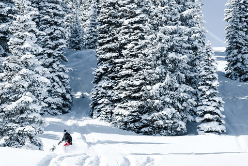 Unframed photo of snowy trees and snowboarder