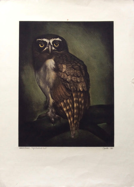 Spectacled Owl by Jack Coutu - Artist's Proof