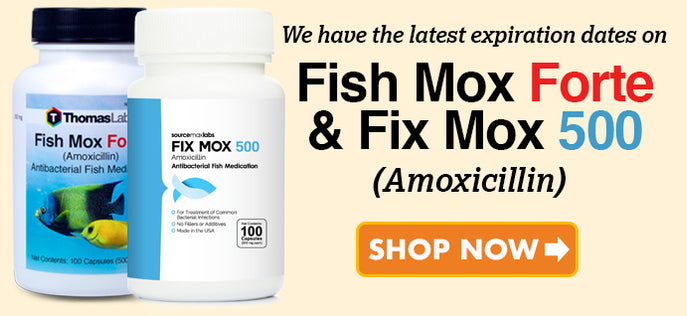 Fish Mix Amoxicillin