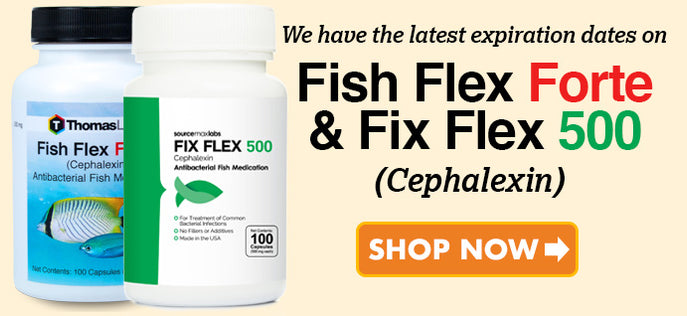 Fish Flex Cephalexin