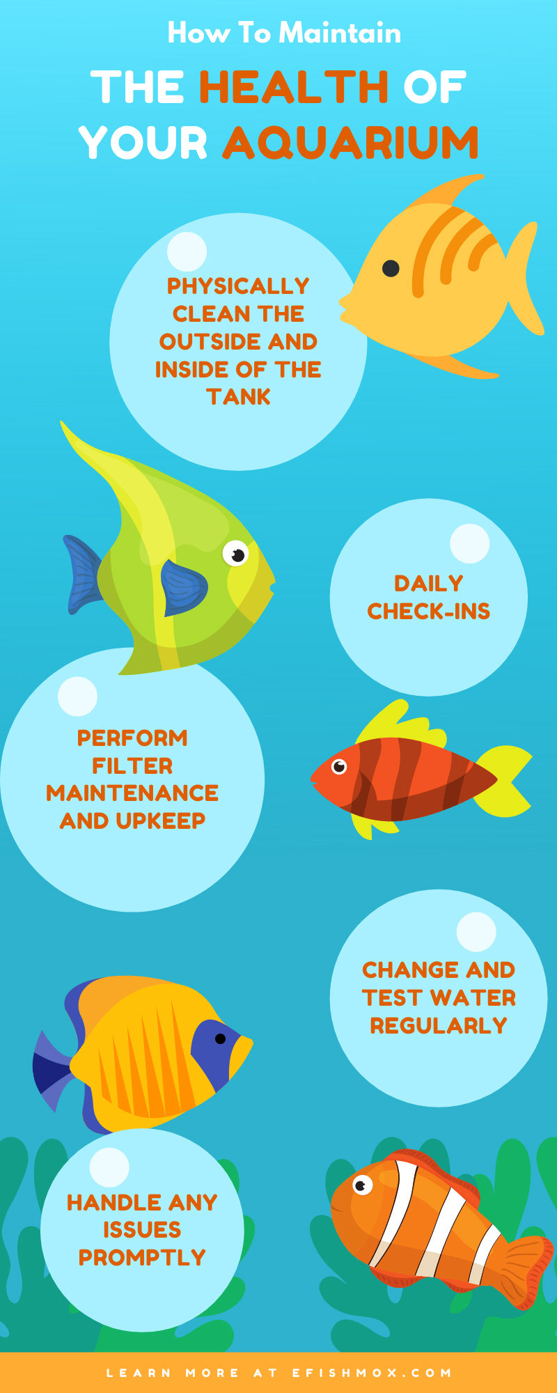 How To Maintain the Health of Your Aquarium
