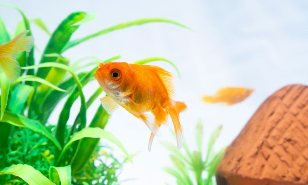 How To Care for Freshwater Aquatic Life