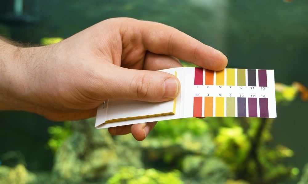 Our Best Tips for Maintaining Aquarium Water Quality