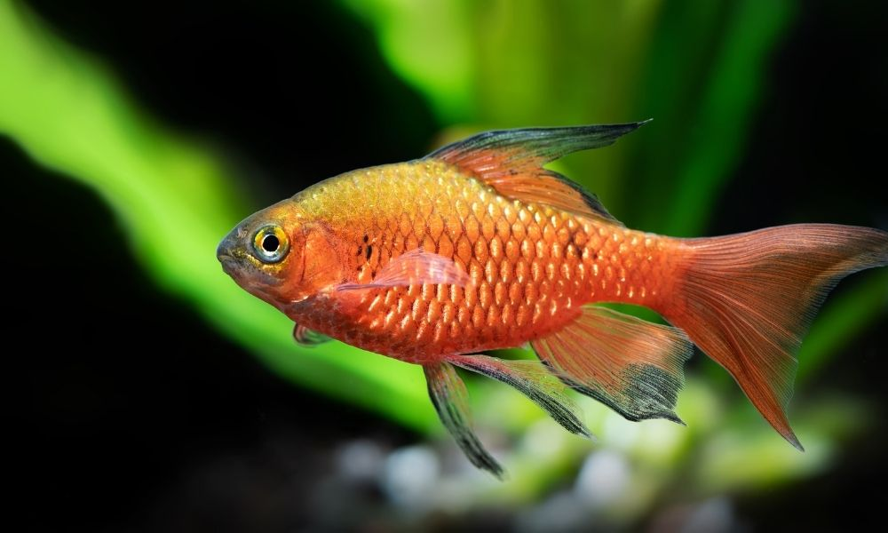 Common Fungal Infections in Fish