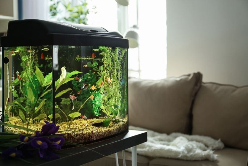 How an at-Home Aquarium Helps Your Health