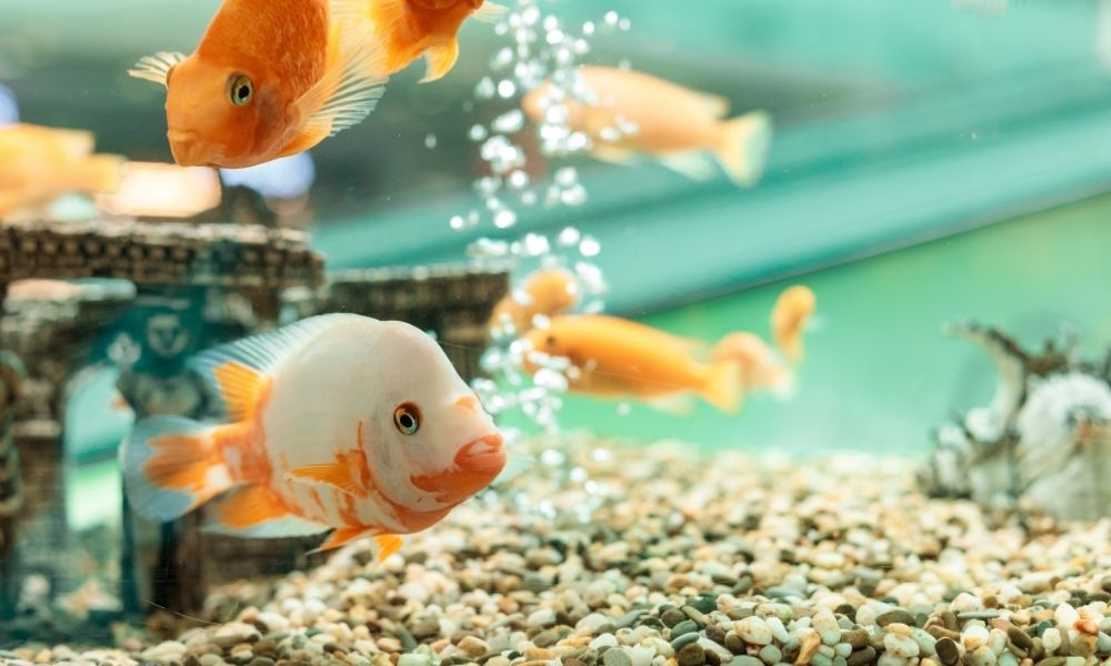 Ways To Remove Nitrate From Your Aquarium