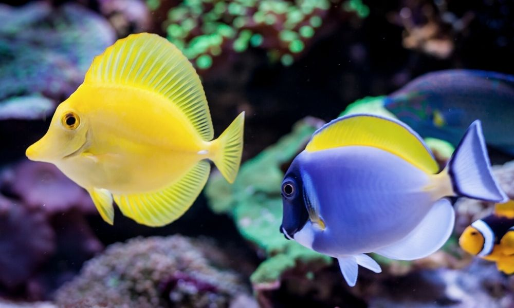 How To Keep Your Pet Fish Alive For Years