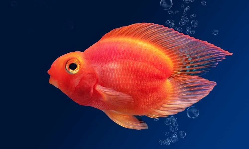 Common Misconceptions About Pet Fish