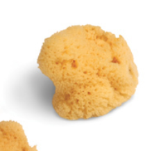 Small Natural Sea Sponge