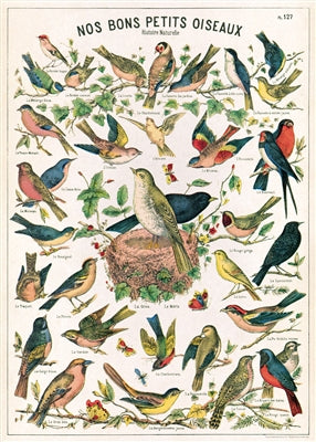 Bird Chart Poster or Wrap