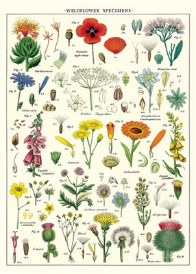 Wildflowers Poster or Wrap