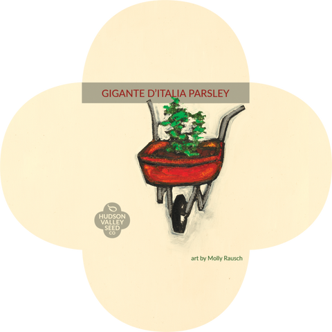 Organic Gigante d'Italia Parsley Seeds