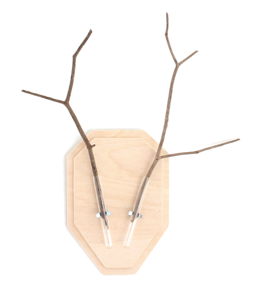 DIY antlers from test tubes