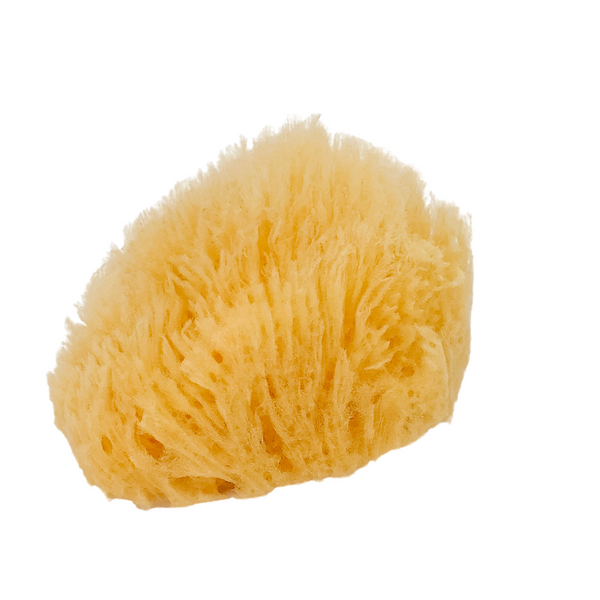 NATURAL BATH SEA SPONGE - GRASS - 4 inches