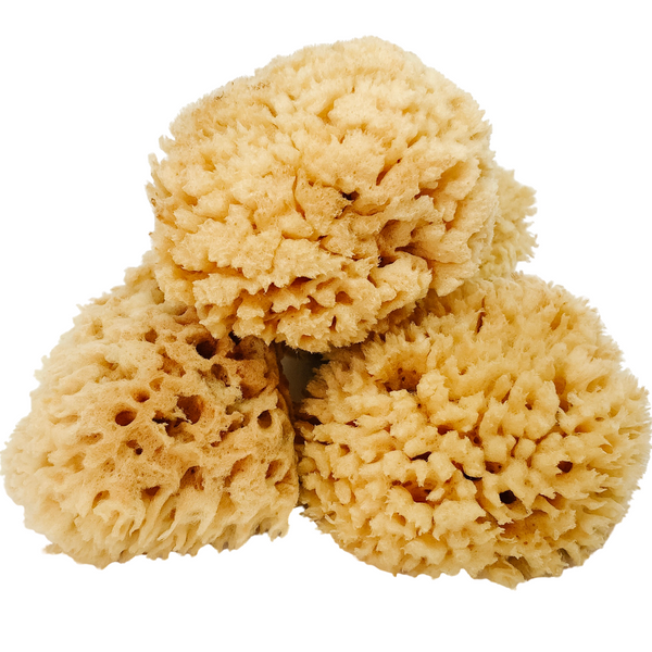 NATURAL BATH SEA SPONGE - WOOL - 3.5 to 5 inches