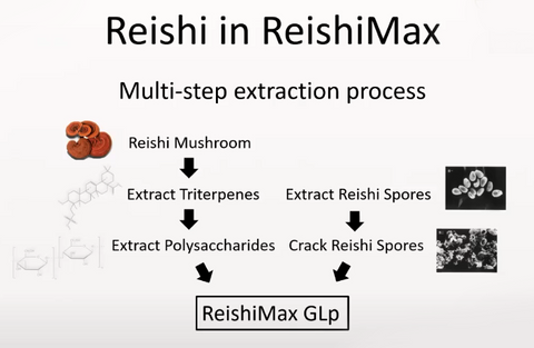 Reishi Multi step Extraction