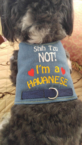 I'm A Havanese Harness