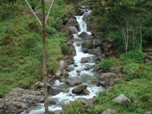 mountain creek in the highlands of Tarrazu during green season