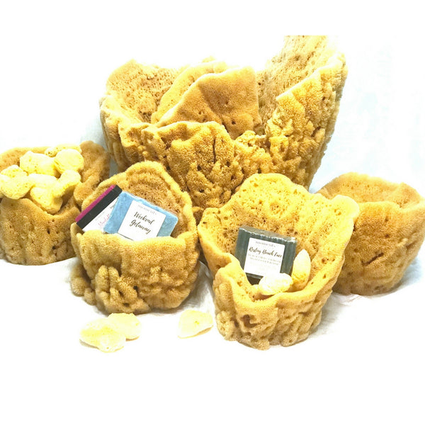 Natural Sea Sponge Vases and Facial Silk Sea Sponges