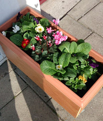 Healthlink Flower Box 2