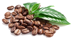 Windward Coffee's new website offers more value and greater selection of coffees for your enjoyment.