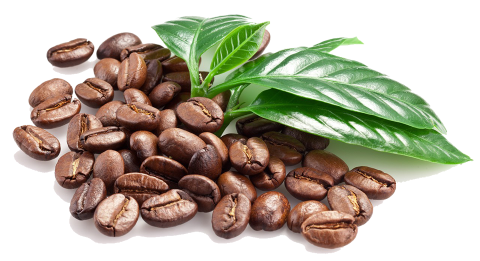 Windward Coffee Buy Coffee Online Brewers Gifts Wholesale