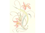 Peach Day Lily Item # 1337