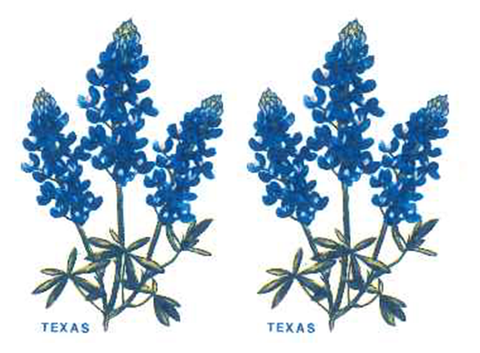 1532 Texas Blue Bonnet Flower