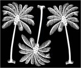 "Palm Tree Trio (3 pcs)  4"" X 2-1/4"" Black #944 or White #957 Fused Glass Decals"