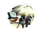 3011 Rainy Day Bird Friends Umbrella