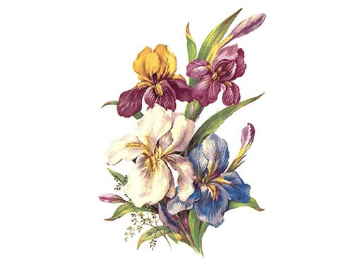 Iris Flowers 3252 Ceramic Decals