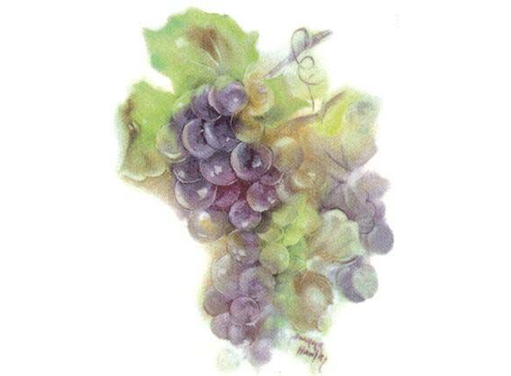 Joanne Hawley Grapes  339