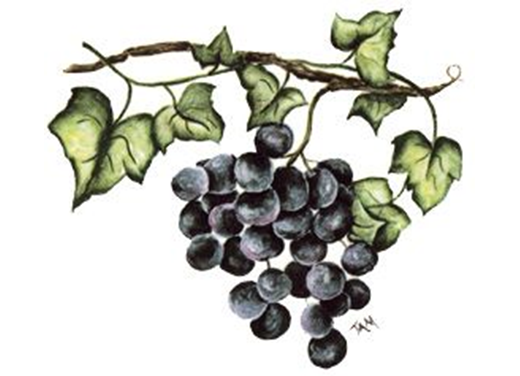 5391 Purple Grape Cluster on the Vine