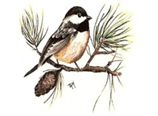 Chickadee Pine Branch 5392