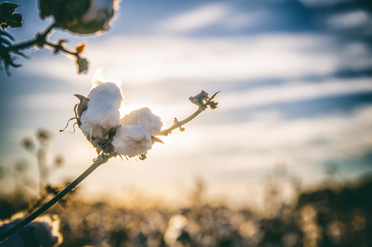 Benefits of Organic Cotton - Casualbox Japan Blog
