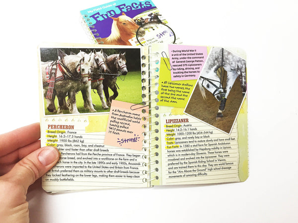 Horse facts book with horse kinds  description