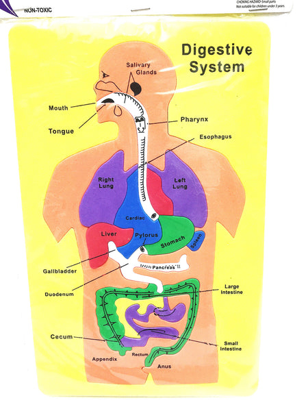Digestive system foam puzzle