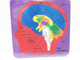 Brain anatomy foam puzzle