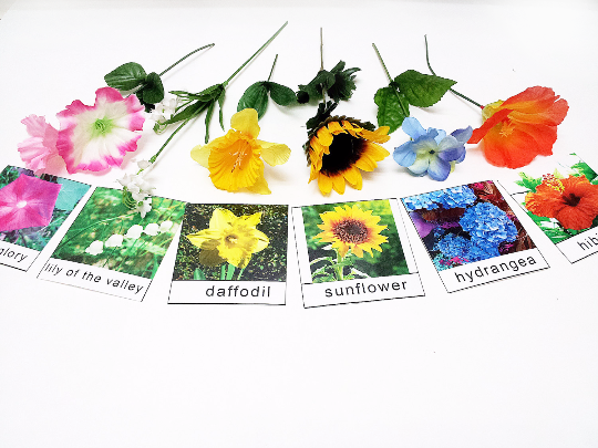 Montessori Flower matching activity with cards and flower props, 17 kinds, encyclopedic knowledge