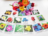 Montessori Flower matching activity with cards and flower props SET 2, 18 kinds, encyclopedic knowledge