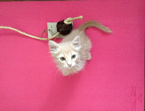Pink Yoga Cat Mat Toy