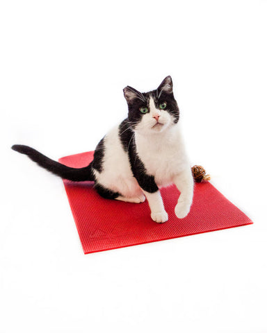 The Yoga Cat Mat Toy