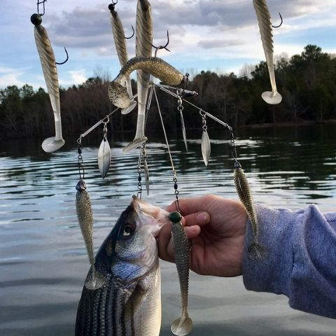 Umbrella rig with lures