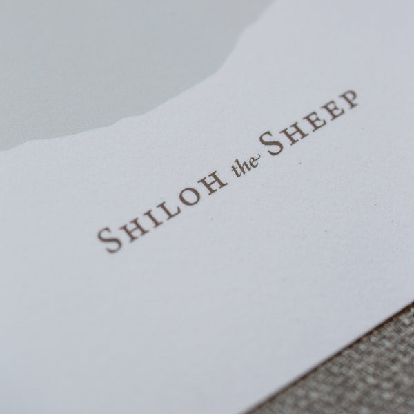 Shiloh the Sheep