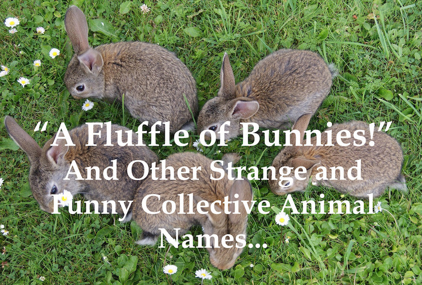 A Fluffle of Bunnies! And Other Strange and Funny Collective Animal Names...