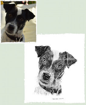 Charcoal Portrait Of Badger The Jack Russell - From Start to Finish