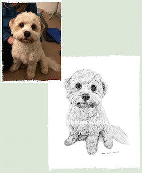 Pet Portrait - Start to Finish - Bailey Boo